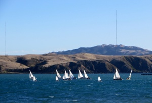 Sailing in Plimmerton...a joy to behold