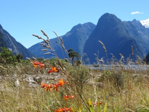 Mitre Peak in Milford Sound...the pointy one on the right