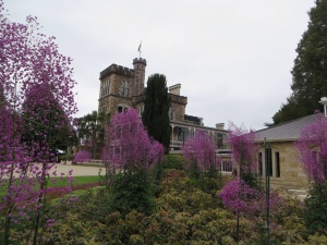 Larnach Castle with Thalictrum Delavayi blooming