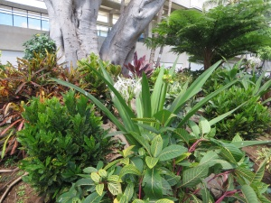 In a garden at Honolulu airport