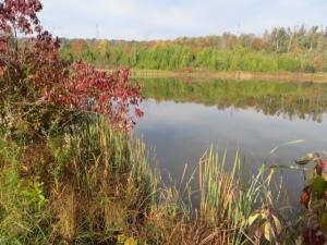 Maitland River awakening