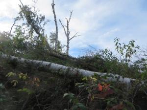 2011 tornado still leaves its toll