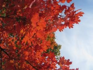 2014 amazing fall colour
